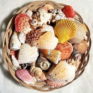 Free Sea Shells!🧜♀️🐚